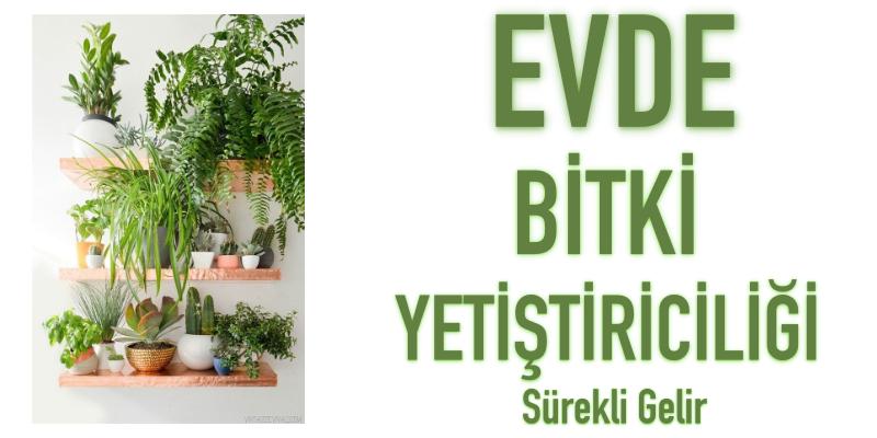 evde bitki yetiştiriciliği